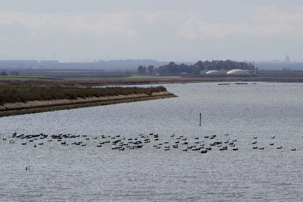 Birdwatching alle saline per i ponti di primavera - Travel Free From