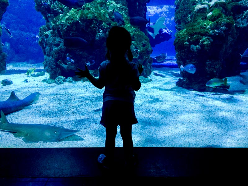Museo oceanografico a Monte Carlo - Travel Free From