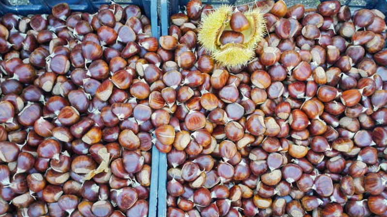 ricci castagne - Travel Free From